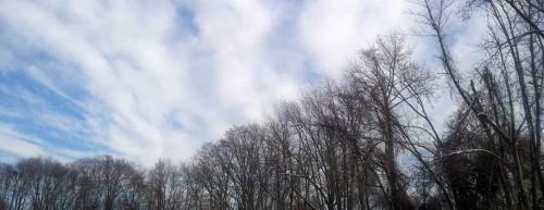 Curved Tree Line